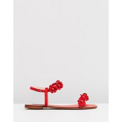 Iris Red by Nina Armando