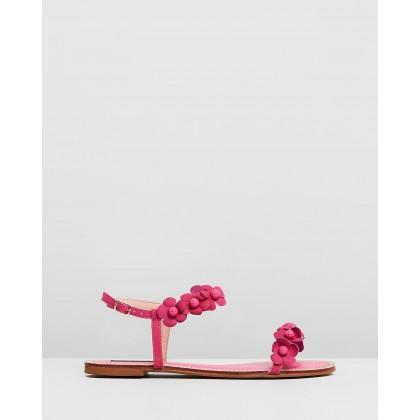 Iris Pink by Nina Armando